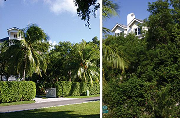 Treetops - Lyford Cay